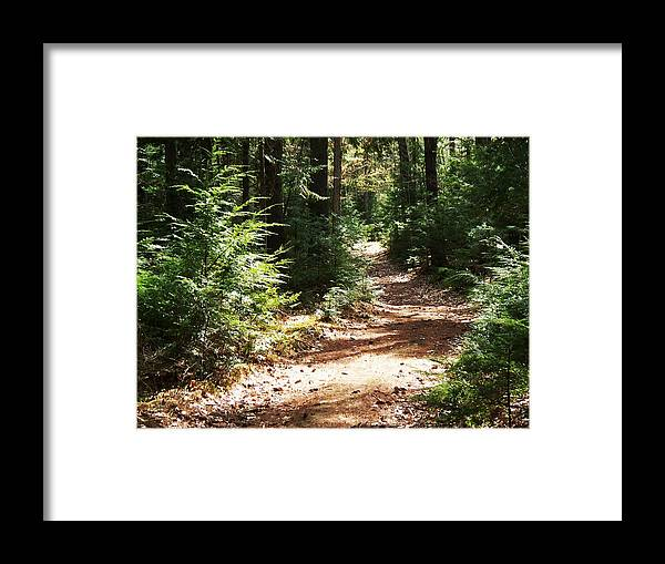 Photography Framed Print featuring the photograph A Walk In The Woods by Joy Nichols