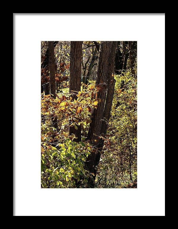 Woods Framed Print featuring the photograph A Walk Through The Woods - 1 by Linda Shafer