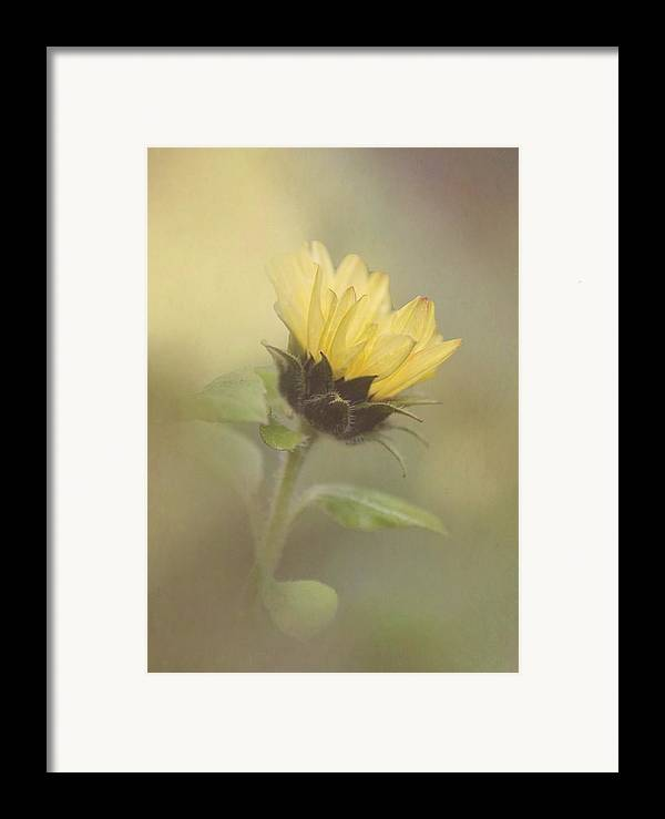 Sunflower Framed Print featuring the photograph A Whisper Of A Sunflower by Angie Vogel