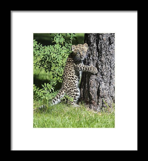 Acrylic Framed Print featuring the photograph A Whole New World by Sandra Bronstein