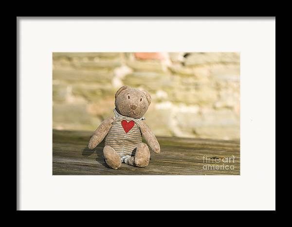 Abandoned Framed Print featuring the photograph Abandoned Bear by Anne Gilbert