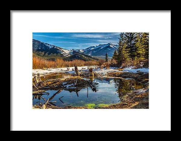 Alberta Framed Print featuring the photograph Abandoned Trunks In Vermillion Lakes by Levin Rodriguez