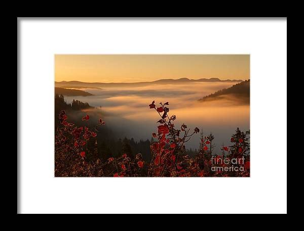Idaho Framed Print featuring the photograph Above The Mists by Idaho Scenic Images Linda Lantzy