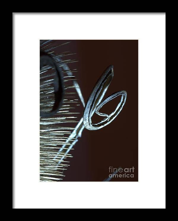 Thistle Framed Print featuring the photograph Abstract Autumn by Amalia Suruceanu