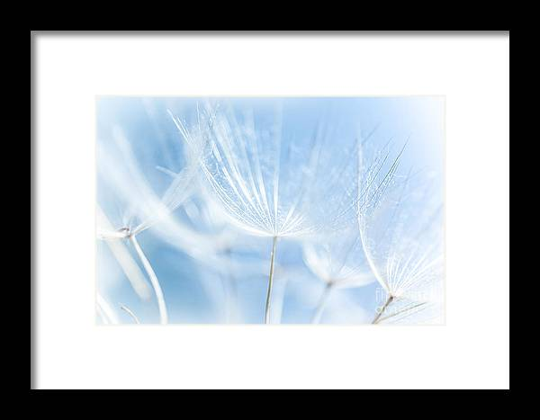 Abstract Framed Print featuring the photograph Abstract Dandelion Background by Anna Om