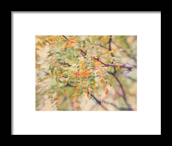 Healing Photography For Branch Photo Meditation Framed Print featuring the photograph Acacia In Warm Colors by Irina Wardas