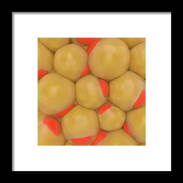 Tissue Framed Print featuring the photograph Adipose Tissue by Science Photo Library