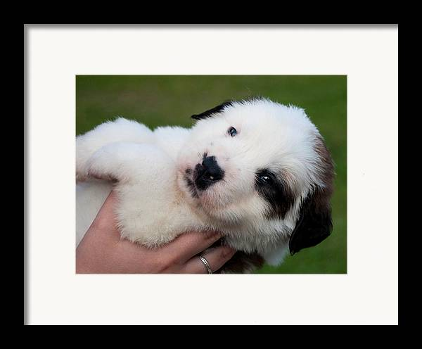 Adorable Hand Full Framed Print featuring the photograph Adorable Hand Full by Mechala Matthews