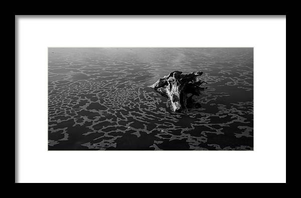 Driftwood Framed Print featuring the photograph Adrift by Alex Lapidus