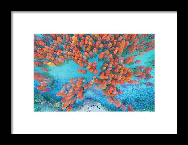 Tranquility Framed Print featuring the photograph Aerial Drone View With Fir Tree Fall by Yaorusheng