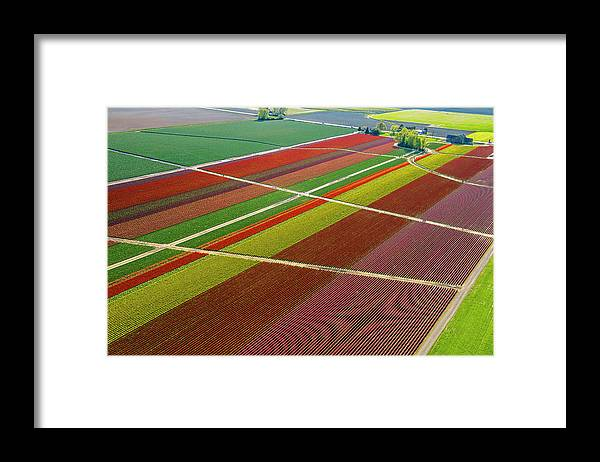 Scenics Framed Print featuring the photograph Aerial View Of Colorful Tulip Fields by Pete Saloutos