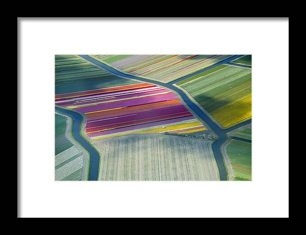 Curve Framed Print featuring the photograph Aerial View Of Flower Fields In Spring by Frans Sellies