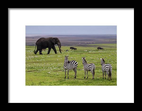 Africa Framed Print featuring the photograph Africa Tanzania African Elephant by Ralph H. Bendjebar