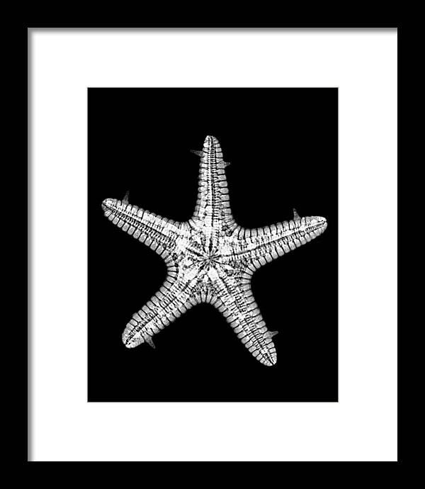 Sea Framed Print featuring the photograph African Star by William A Conklin