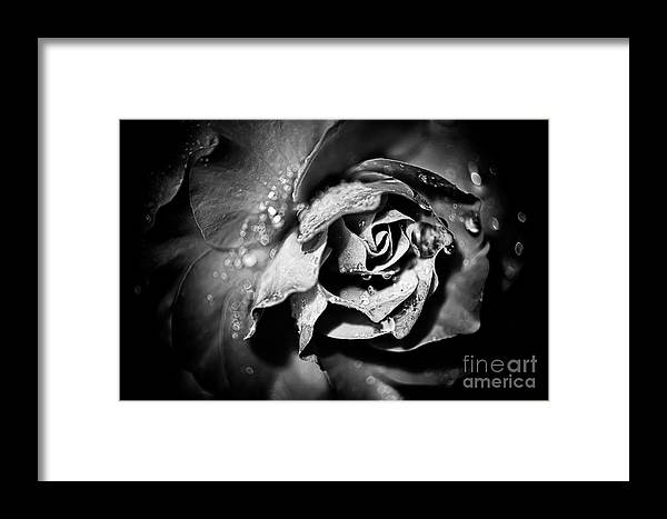 Beauty In Nature Framed Print featuring the photograph After The Storm by Venetta Archer