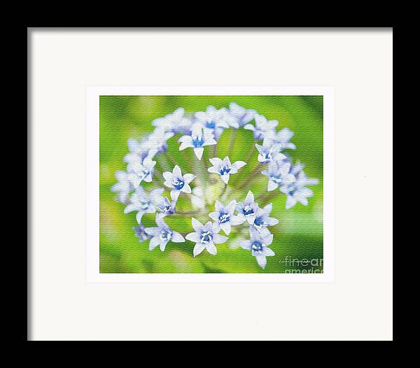 Agapantha Purple Flowers Framed Print featuring the photograph Agapantha Purple Flowers by Artist and Photographer Laura Wrede