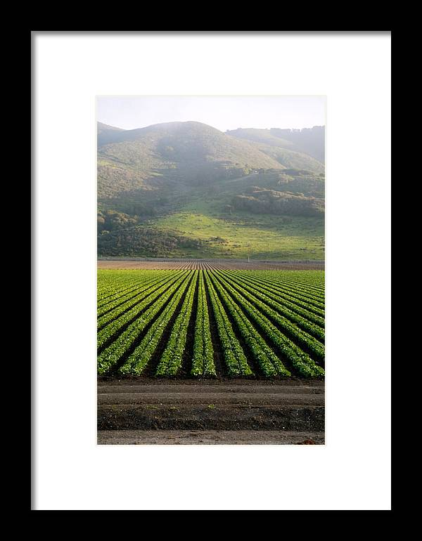 Agriculture Framed Print featuring the photograph Agricultural Rows by Marc Levine