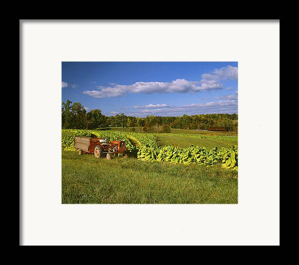 Agriculture Framed Print featuring the photograph Agriculture - Fields Of Maturing Flue by R. Hamilton Smith