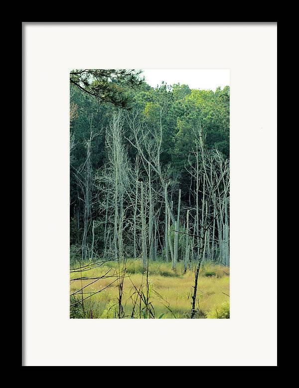 Alabama Autumn Marsh Framed Print featuring the photograph Alabama Autumn Marsh by Maria Urso