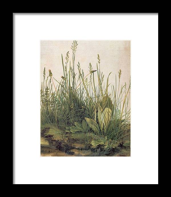 Great Piece Of Turf Framed Print featuring the painting Albrecht Durer Great Piece Of Turf by Albrecht Durer