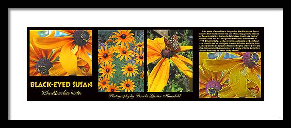 Black-eyed Susan's Framed Print featuring the photograph All About Black-eyed Susans by Brooks Garten Hauschild