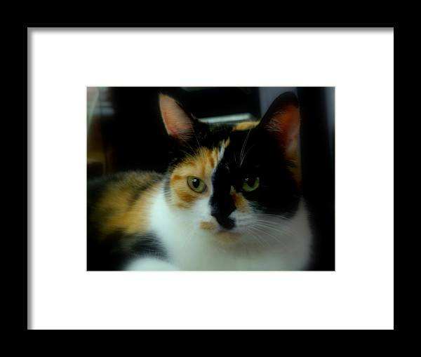 House Cat Framed Print featuring the photograph All I Ask Of You by Lingfai Leung