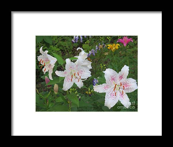 Flowrs Framed Print featuring the photograph All In White by Brenda Ketch