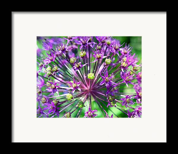 Flower Photography Framed Print featuring the photograph Allium Series - Close Up by Moon Stumpp