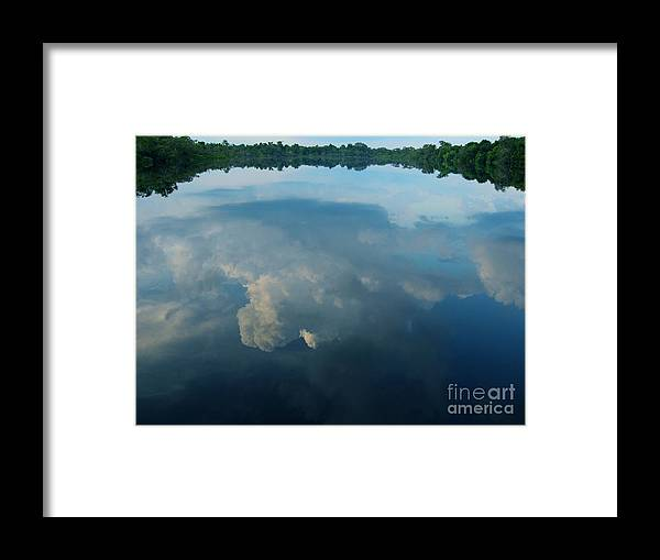 Amazon Framed Print featuring the photograph Allpahuayo II by Gart Van Gennip