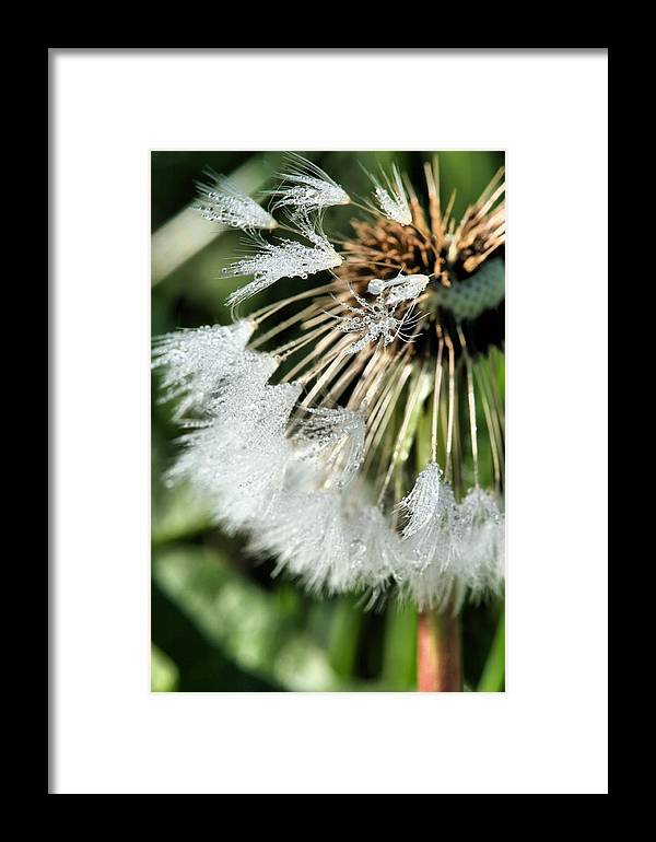 Almost Gone Framed Print featuring the photograph Almost Gone by JC Findley