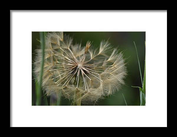 Framed Print featuring the photograph Almost Whole by Beth Sanders
