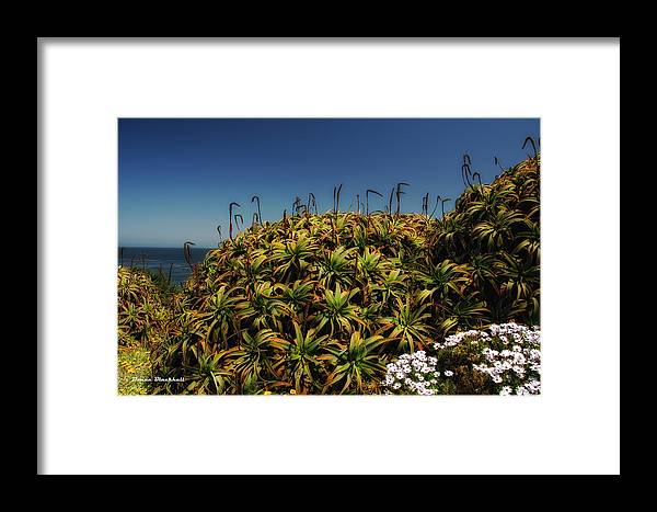 Aloe Framed Print featuring the photograph Aloe Is Anyone There by Donna Blackhall