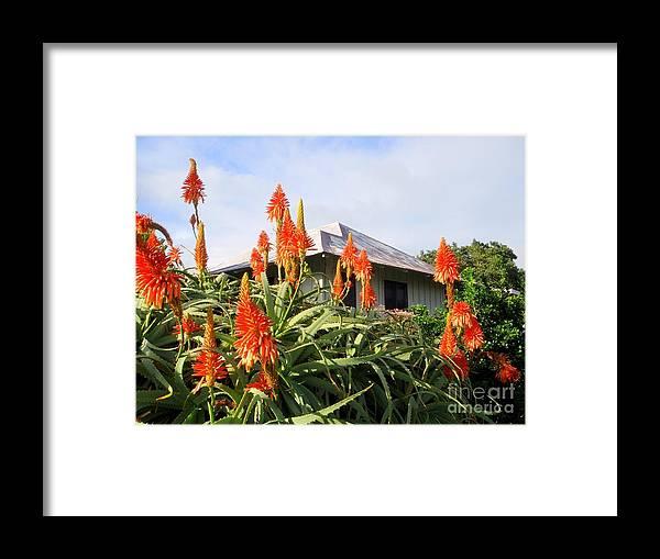 Aloe Vera Framed Print featuring the photograph Aloe Vera And Tin Roof Plantation House by Mary Deal