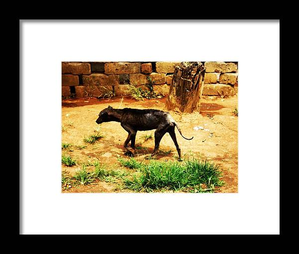 Dog Framed Print featuring the photograph Alone And Starving by Tuntufye Abel