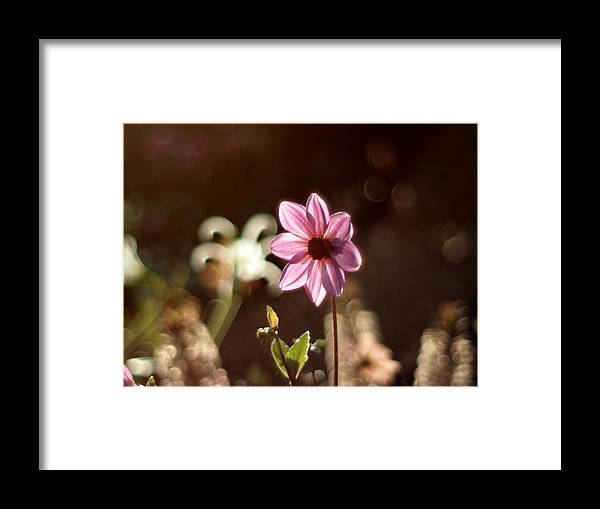 Flower Framed Print featuring the photograph Alone by Atchayot Rattanawan