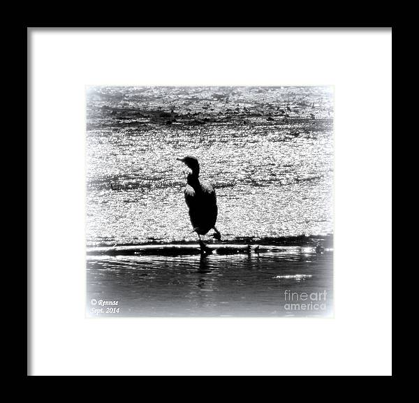 Birds Framed Print featuring the photograph Alone Time by Rennae Christman