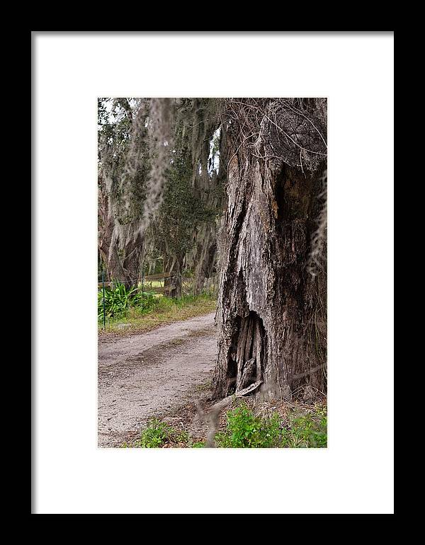 Florida Framed Print featuring the photograph Along A Sandy Road In Florida by Mark Mitchell