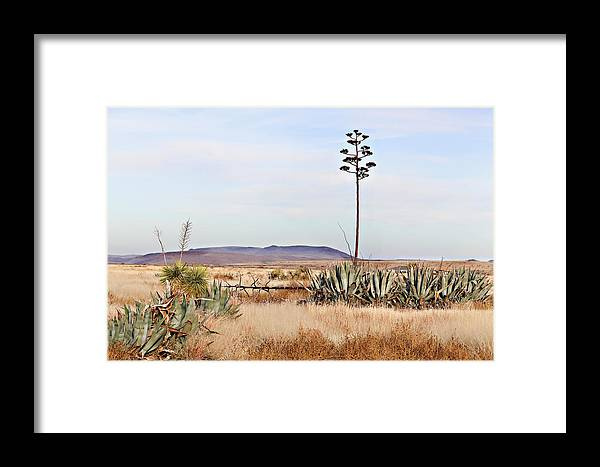 Alpine Texas Scenery Framed Print by Tony Colvin