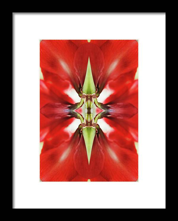 Tranquility Framed Print featuring the photograph Amaryllis Flower by Silvia Otte