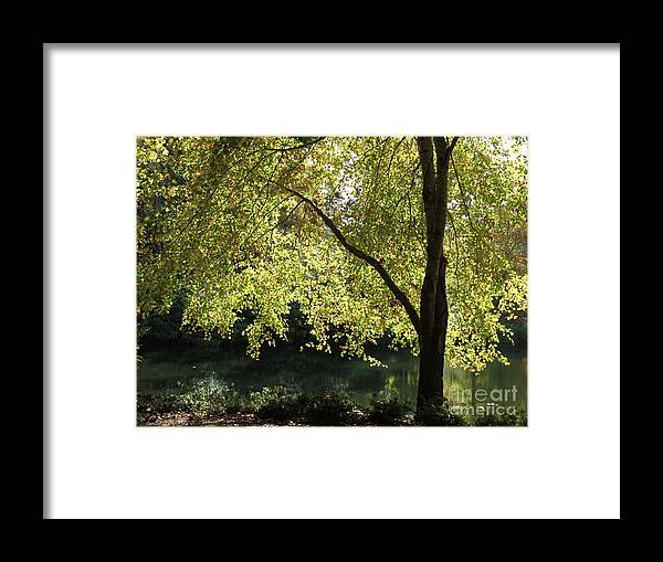Tree Framed Print featuring the photograph Amazing Light by Anita Adams