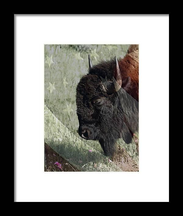 American Bison Framed Print featuring the digital art American Bison by Ernie Echols
