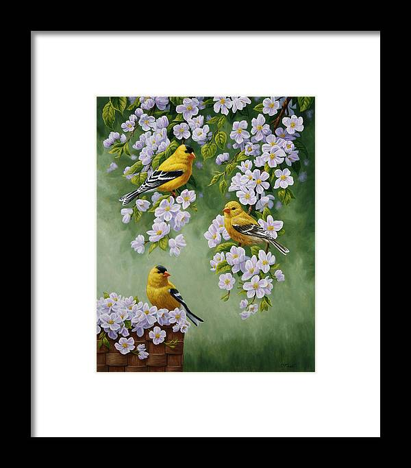 Bird Framed Print featuring the painting American Goldfinches And Apple Blossoms by Crista Forest