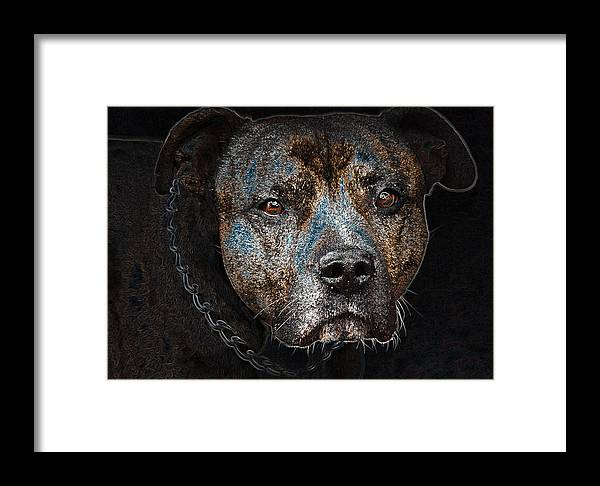 American Mastiff Framed Print featuring the photograph American Mastiff by Tage Persson