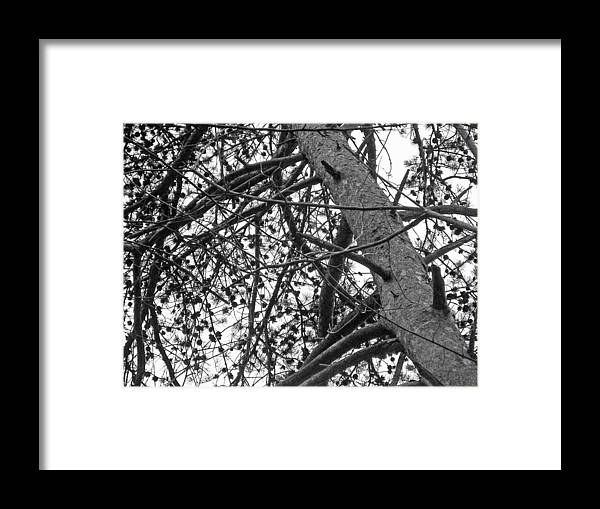 Pines Framed Print featuring the photograph Amidst The Pines Is The Barrens by Mother Nature