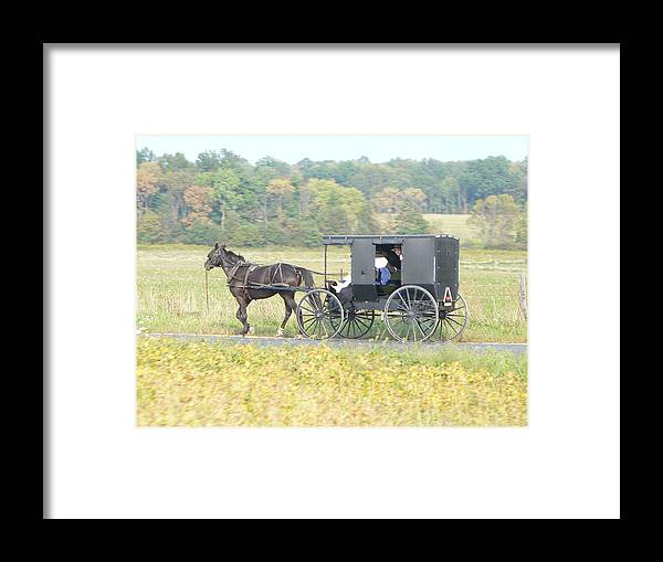 Horse Framed Print featuring the photograph Amish Buggy by Pineapple XVI