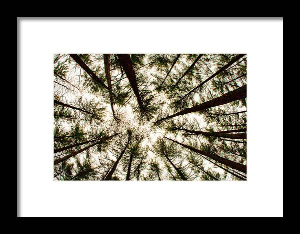 Trees Framed Print featuring the photograph Among The Trees by Kristia Adams