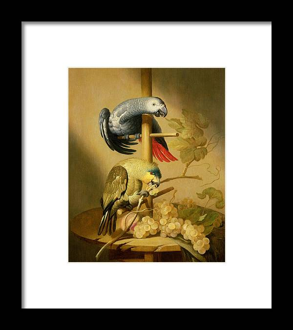 Birds Framed Print featuring the photograph An African Grey And An Orange Winged Amazon Parrot On A Perch With Grapes by Jacob Fransz van der Merck