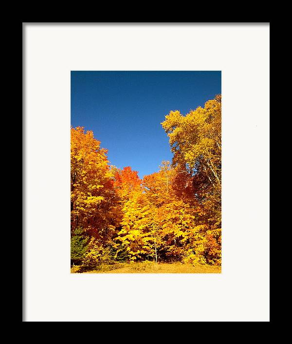 Minnesota Framed Print featuring the photograph An Autumn Of Gold by Danielle Broussard