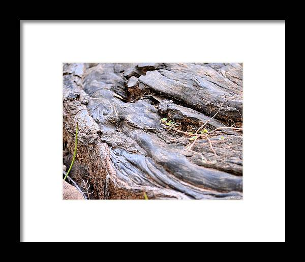 An Earthen Abstract Framed Print featuring the photograph An Earthen Abstract by Maria Urso