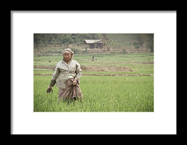 Working Framed Print featuring the photograph An Old Woman Working In A Rice Field by Nicholas J Reid